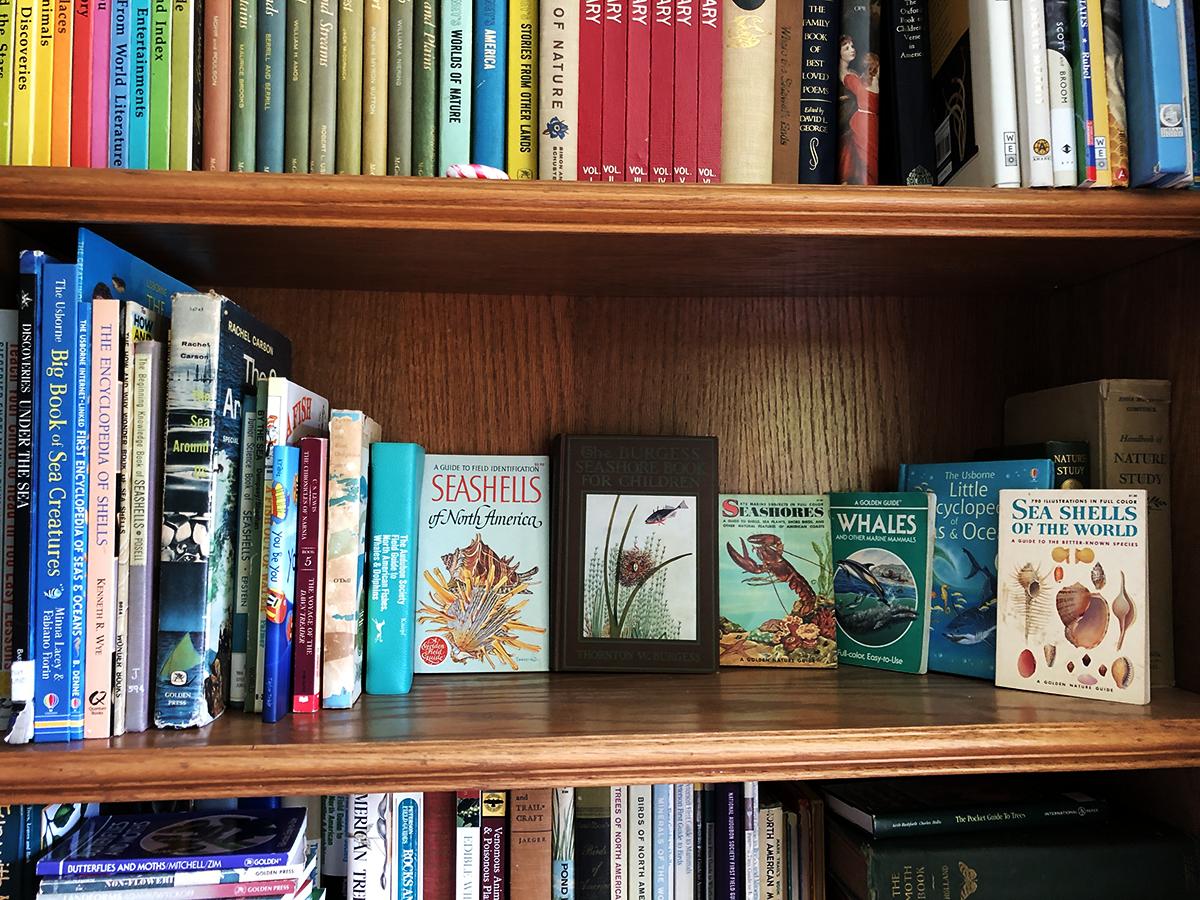 gather 'round homeschool oceans unit bookshelf