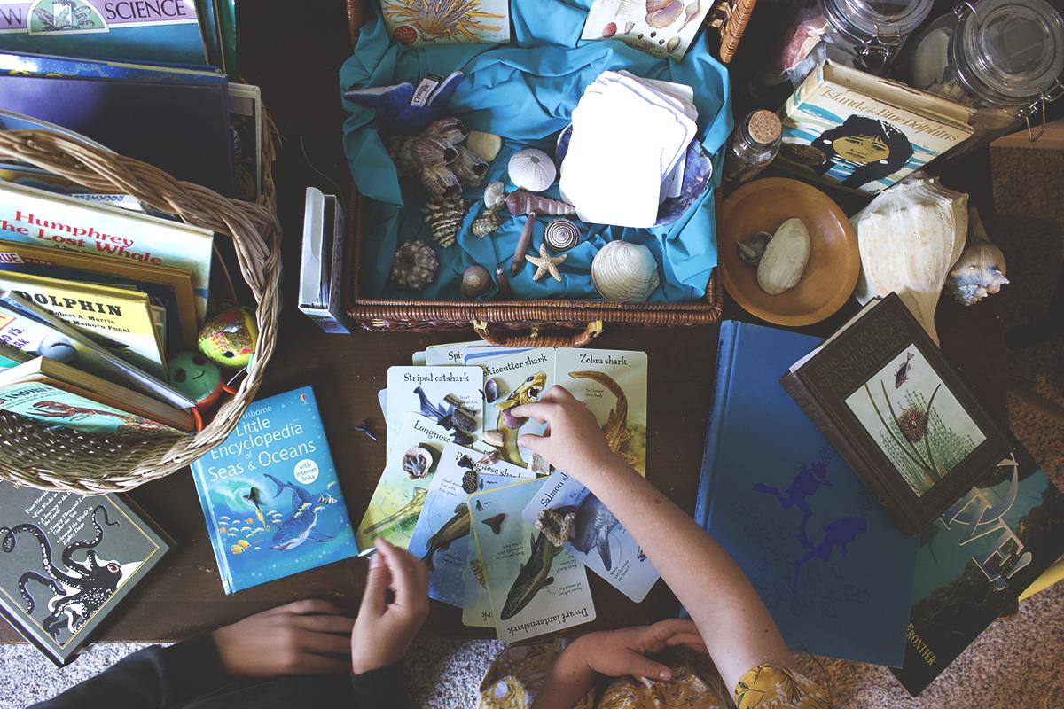 gather 'round homeschool oceans unit flatlay